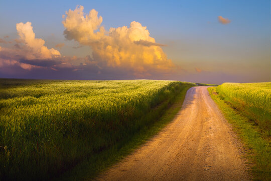 Summer natural landscape. Dirt road through a green wheat field.  Sunrise over the field