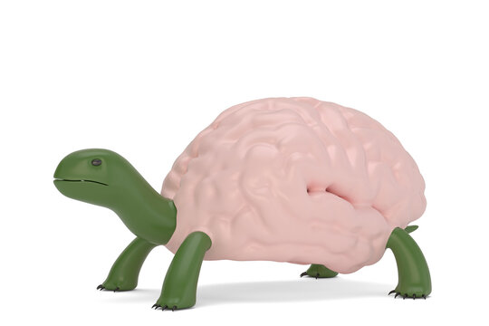 Creative concept illustration, turtle brain isolated on white background. 3D illustration.