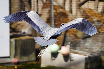 Antwerp zoo Antwerpen park