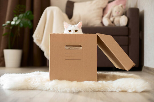 A white cat sits in a cardboard, craft box, peeking out of it. The cat plays with the children.