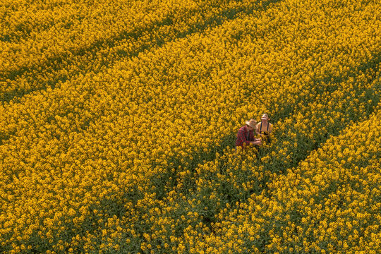Aerial view of two farmers, man and woman, working in blooming rapeseed field