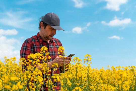 Farmer using mobile smart phone app in blooming rapeseed field