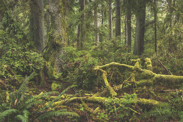 Tranquil scenery of an enchanting forest in Point Defiance Park in Tacoma, Washington