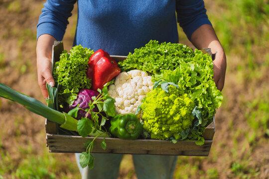Wooden crate of green vegetables held by woman in garden