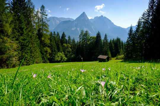 Green alpine meadow with lone hut in background