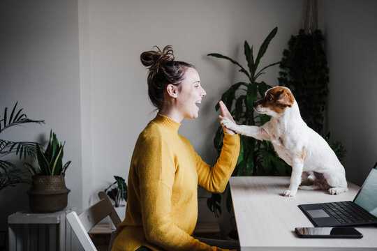 Playful woman giving high-five to dog while sitting at home office