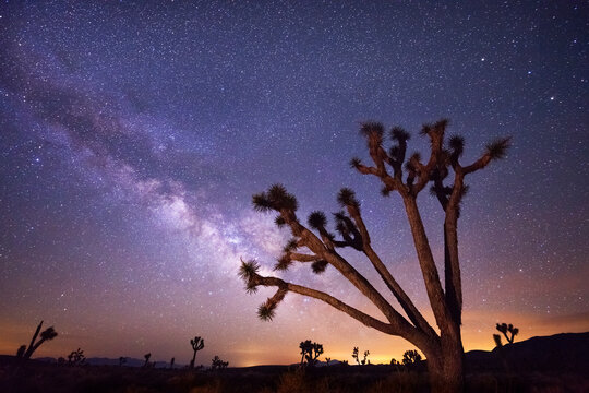 A large Joshua tree frames the summer constellation of the Milky Way, photographed in the wilderness of Death Valley. Single exposure of f/2.8, ISO 4000, 30 seconds