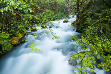 Lush forest lines North Fork Cascade River, Mount Baker-Snoqualmie National Forest, Washington. Wall mural