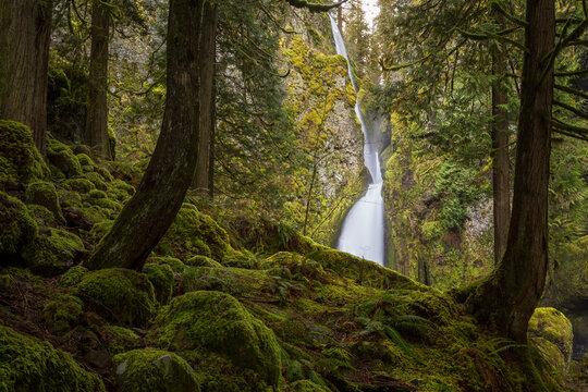 Looking through the woods at Wahclella Falls