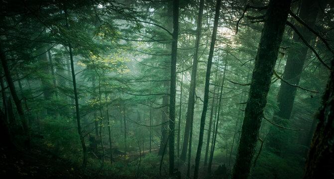 Temperate rainforest of western Washington.