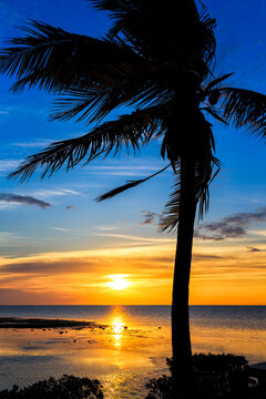 Palm tree and sunrise wish visitors a good morning in the Florida Keys!