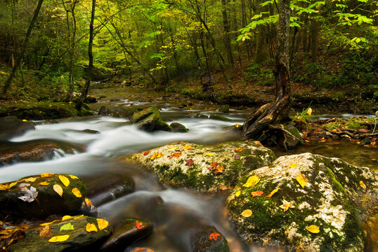 Autumn stream scene in Laurel Creek section of the Smoky Mountains.