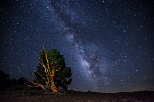 The milky way over Ancient Bristlecone Pine trees in the White Mountains of California in the Eastern Sierra Nevada mountains.