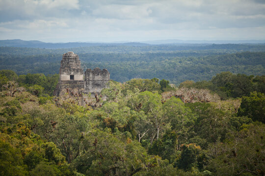 An ancient pyramid emerges from the forest at the Mayan Ruins of Tikal, Guatemala.