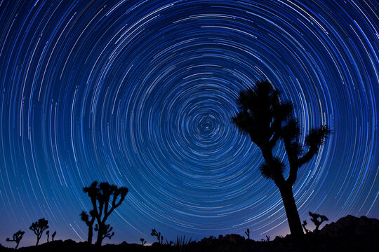 Joshua trees and star trails in the Joshua Tree National Park in California.