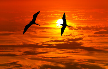Sunset Freedom Birds