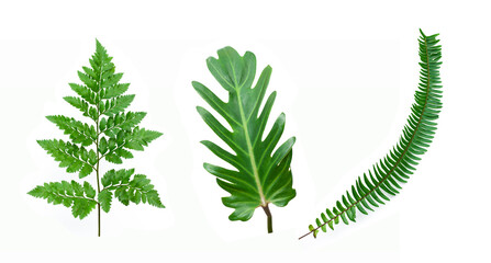 set of tropical fern leaf on white background for design elements, Flat lay