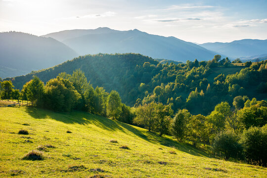 rural landscape in mountains at sunset. trees and fields on grassy rolling hills. beautiful countryside scenery of transcarpathia region, ukraine, in evening light. wonderful sunny weather in autumn