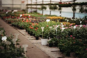 Obraz ogrodnictwo kwiaty doniczki - fototapety do salonu