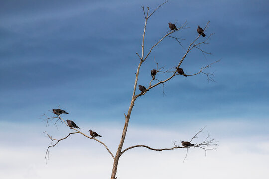 Palomas en árbol