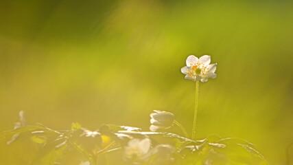 Kolorowe kwiatki wiosenne na tło.