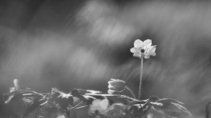 Fototapeta Kolorowe kwiatki wiosenne na tło.
