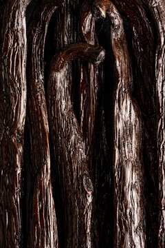 Closeup of whole vanilla beans