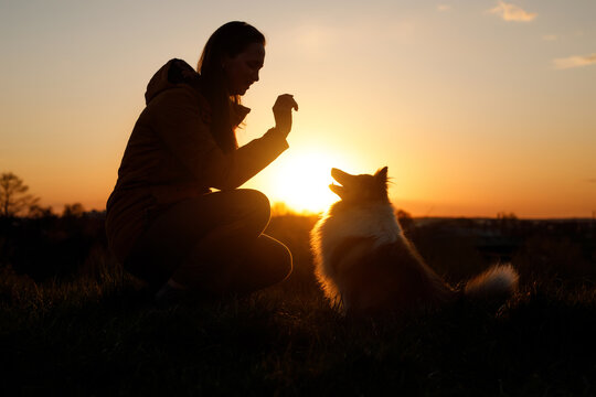Train your pet at sunset. The friendship between owner and dog.