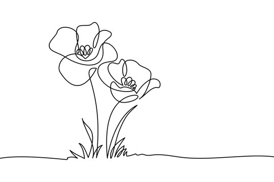 Poppy flowers in continuous line art drawing style. Doodle floral border with two flowers blooming among grass. Minimalist black linear design isolated on white background. Vector illustration