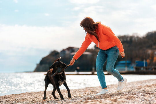 A young woman plays with a black dog on the beach, taking a stick from his mouth. Games with pets on outdoor. The concept of pet care