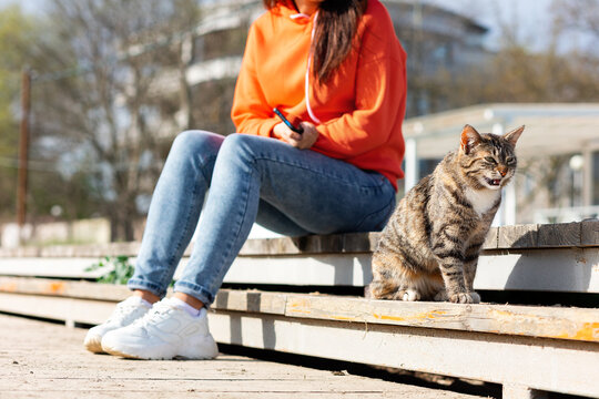 A female volunteer sits on a bench near a stray meows cat. A shelter worker takes care of the street animals. Outdoor. Close up. Concept of day of protection and care of stray animals