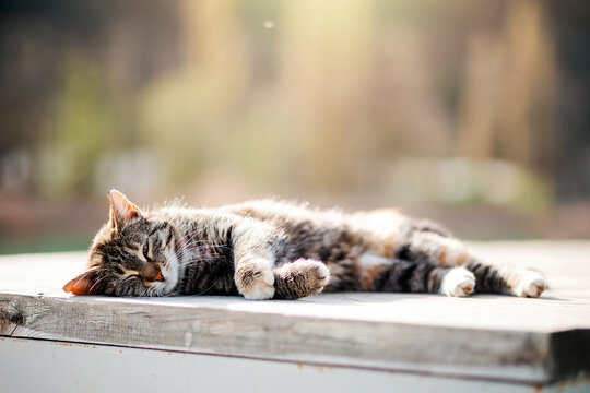 A stray cat sleeps on a bench. Animal Welfare Day. Copy space. Concept of care for stray animals