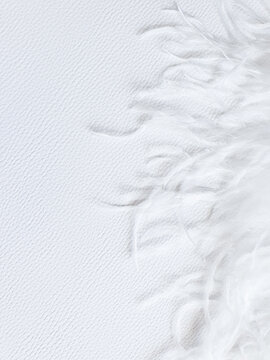 White feather on white textured background. Frame, free space for your text or product. Tenderness concept, vertical photo