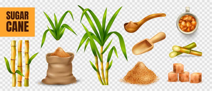 Sugar Cane Transparent Set