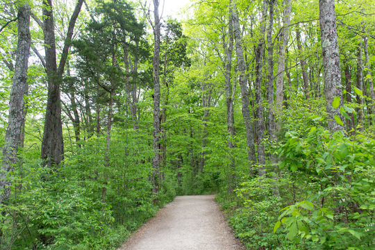 Nature walk along a path surrounded by green trees and shrubs during spring.