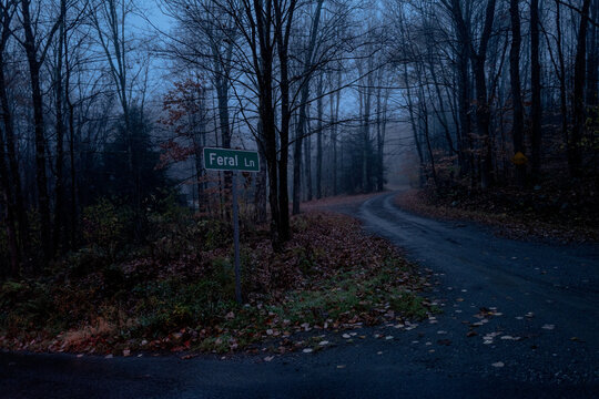 A street sign for Feral Lane on a foggy night