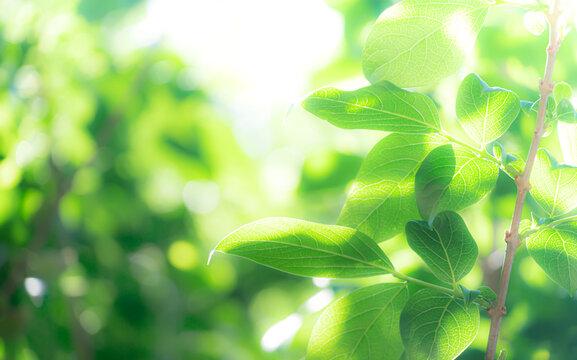 優しい雰囲気の新緑の葉