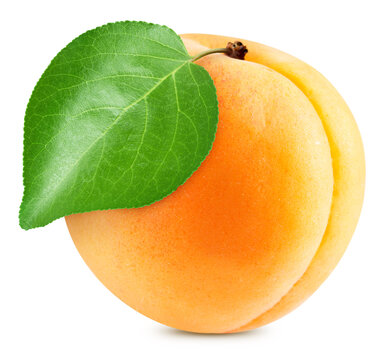 Whole apricot on white background. Apricot isolated on white background. Apricot with leaves