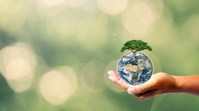 a hand that holds the earth and the tree means healing the tree is equal to healing the world to reduce global warming This photo illustration is decorated by NASA. Nature conservation concept