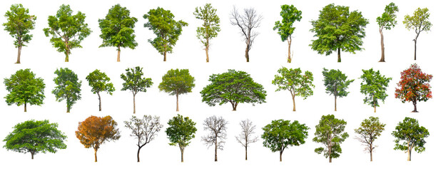 isolated big tree collection isolated