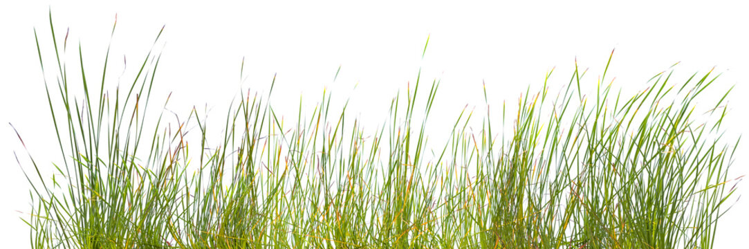 bordure de brins d'herbes, fond blanc