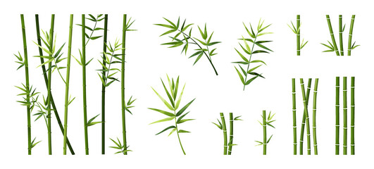 Fototapeta Bamboo leaf and stick. Cartoon tropical trees trunks. Green Asian plants. Straight segmented stems and branches set. Japanese decorative elements for borders. Vector Chinese forest
