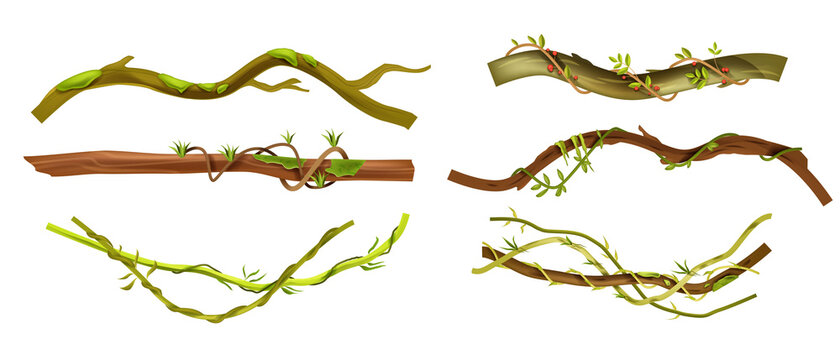 Jungle liana vector tropical set, vine branches, leaves, botanical exotic illustration isolated on white. Nature Amazon rainforest design elements, logs, vegetation collection. Jungle liana climbers