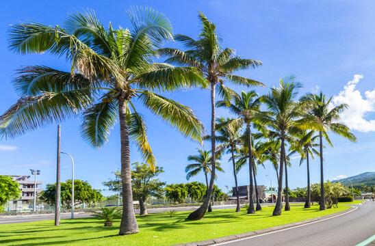 Cocotiers sur rond-point de l'Etang-Salé-Les-Bains, île de la Réunion