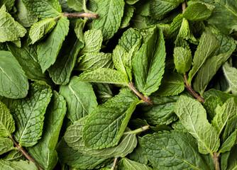 Fototapeta Fresh green peppermint, mint background. The view from top obraz