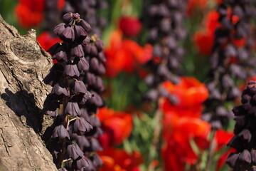 Fototapeta Fioletowy kwiat koło drzewa