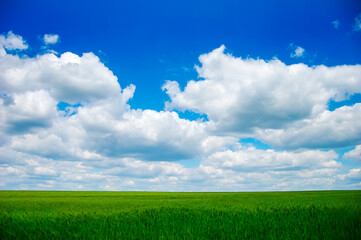 Green wheat field and clouds in sky.