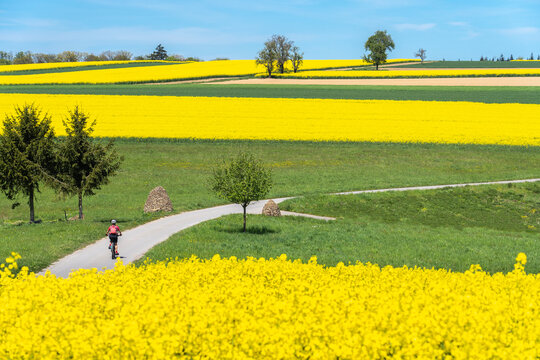 nice and remained young senior woman on electric mountain bike between rapeseed fields in the Kraichgau area near Zaberfeld, Baden-Württemberg, Germany