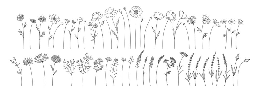 Wildflowers set, line style hand drawn flowers. Meadow herbs, wild plants, botanical elements for design projects. Vector illustration.