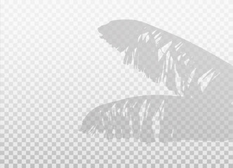 Banana palm leaves isolated on transparent background. Vector realistic shadow with empty space. Natural silhouette without blurring.
